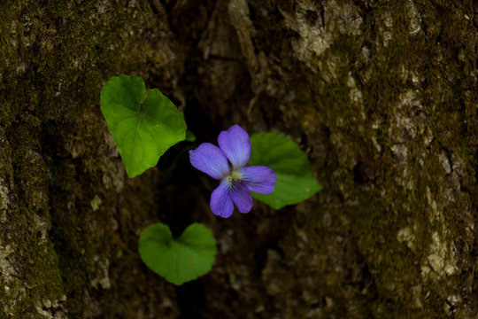 Purple Flower Growing from Tree
