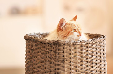 Cute funny cat in wicker basket at home