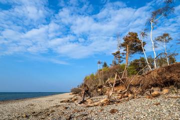 Wall Mural - Strand an der Küste der Ostsee bei Graal Müritz