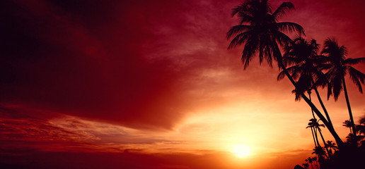 Photo sur Toile Rouge mauve Palm trees and red sky with sunlight.Sky sunset on Caribean.