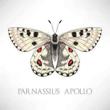 Vector set of realistic high detailed butterfly