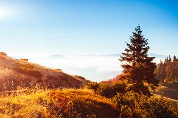 壁紙(ウォールミューラル) - Breathtaking morning moment in alpine foggy valley. Location place of Carpathian mountains, Ukraine, Europe.
