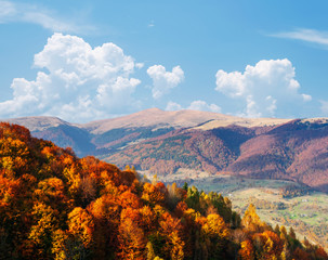 Wall Mural - Bright autumn forest on a mountain slope.  Location place of Carpathian mountains, Ukraine, Europe.
