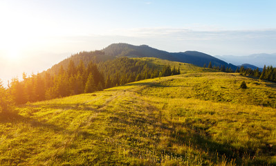 Wall Mural - Idyllic panorama of misty mountains. Location place of Carpathians mountains, Ukraine.