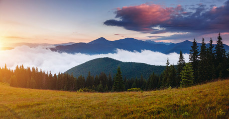 Wall Mural - Morning panorama of misty mountains. Location place of Carpathians mountains, Ukraine.