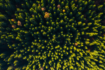 Wall Mural - Aerial top view of summer green trees in wood.