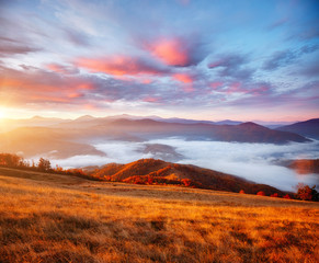Wall Mural - Perfect morning moment in alpine valley. Location place of Carpathian mountains, Ukraine.