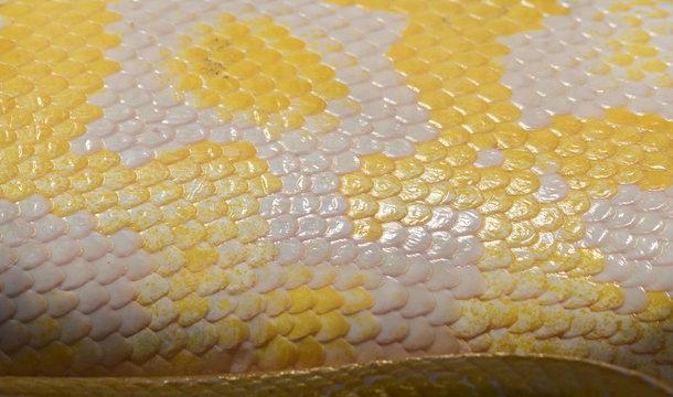 Full Frame Shot Of Yellow Snake Skin
