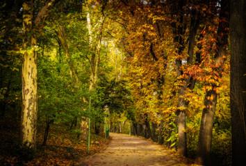 Fototapeta Footpath Passing Through Forest obraz