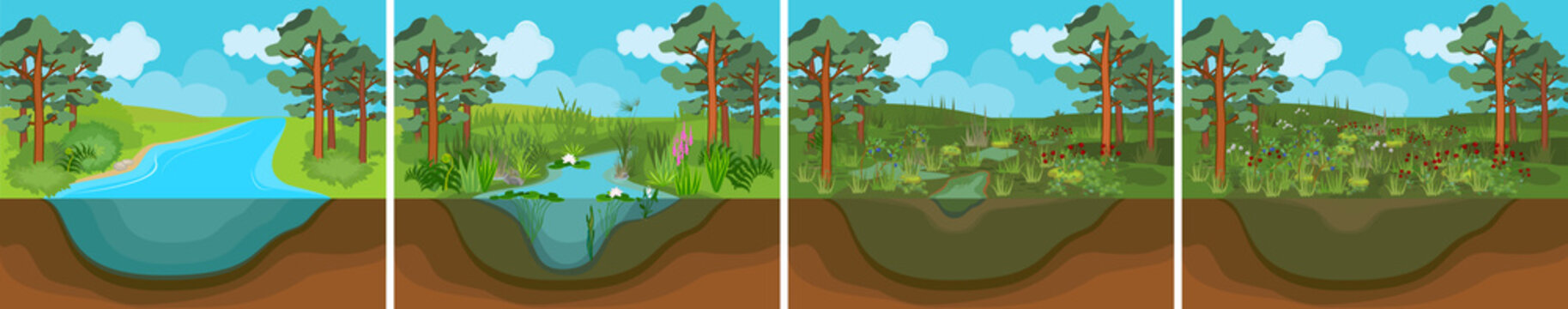 Pond succession. Sequence of stages of biotope change: from pond to swamp