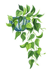 Watercolor botanical illustrations. of potted house plant. Philodendron in a pot isolated on white background. Boho plant