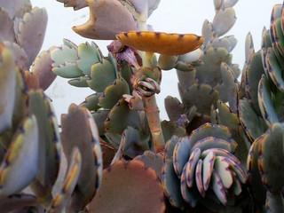 Detail Shot Of Cactus Plants