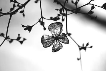 Close-up Of Flowers - fototapety na wymiar
