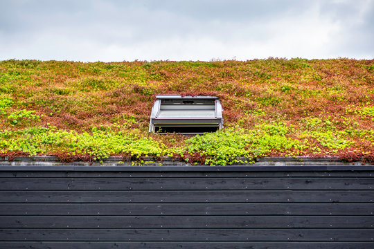 Building with a green roof completely covered with vegetation. Extensive green sustainable sedum roof with succulent plants. Roof greening with succulents. Skylight in the middle of the roof
