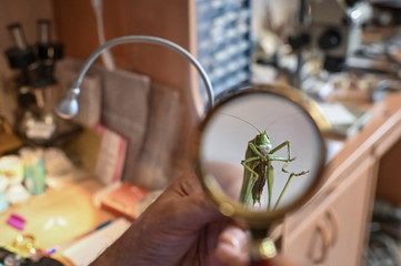 A preserved grasshopper with a mask, a miniature artwork by micro-artist Anatoly Konenko, following the outbreak of the coronavirus disease (COVID-19), is seen in an artist's workshop in Omsk