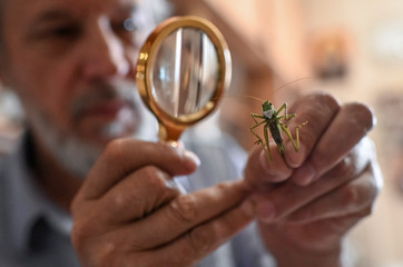Micro-artist Anatoly Konenko looks at a preserved grasshopper with a mask, his miniature artwork following the outbreak of the coronavirus disease (COVID-19), in a workshop in Omsk