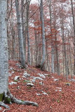 Monte Livata Faggeta autunno Lazio Italia