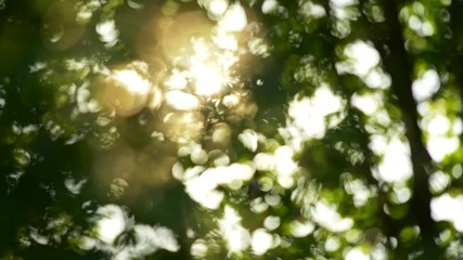 Wall Mural - Summer concept of abstract blurred background. Sun getting through trees foliage. Slow motion shot