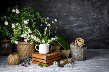 Bouquet spring white Lily of the valley. Floral still life on gray wooden board table in rustic style. Blooming branch bush with flowerbed gardening flower-growing.