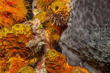 Caribbean coral garden Wall mural