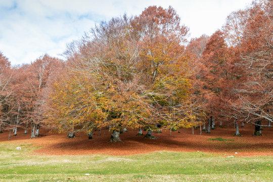 colori dell'autunno a Monte Livata Lazio Italia