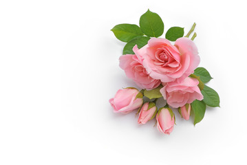 Rosen liegen auf weißem Hintergrund