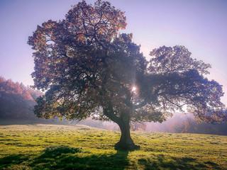 Foto auf Gartenposter Flieder Trees On Countryside Landscape Against Clear Sky