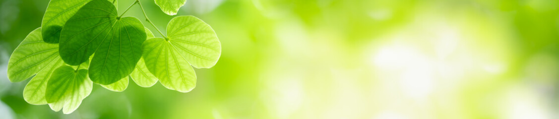 Keuken foto achterwand Lime groen Beautiful nature view of green leaf on blurred greenery background in garden with copy space using as summer background natural green leaves plants landscape, ecology, fresh cover page concept.