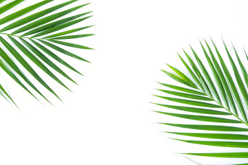 Canvas Prints Palm tree Palm leaf isolated on white background with clipping path. Summer background concept.