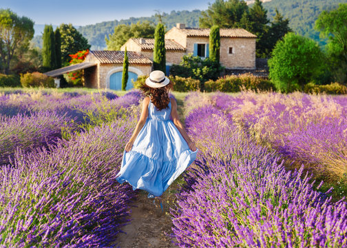 Provence, France. Beautiful view on booming Lavender fields in Provence, France. National park Luberon. Lovely young Caucasian woman enjoying the lavender meadow walking to traditional French house.