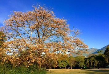 Foto auf AluDibond Dunkelblau Trees On Landscape Against Clear Blue Sky