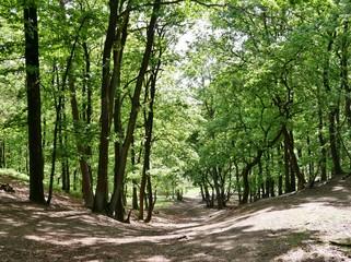 Wald in der Fischbeker Heide Hamburg