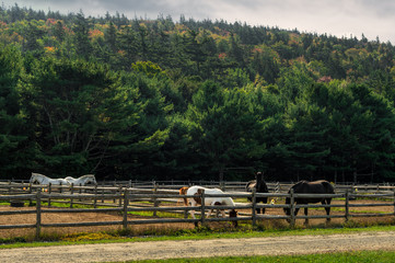 Wall Mural - Horses in Corrals With Autumn Forest Behind