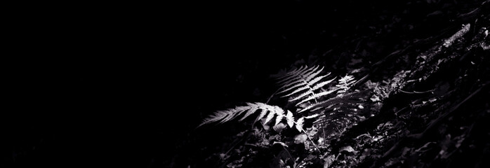 Panoramic View Of Ferns Growing At Night