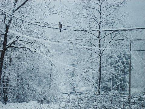 Bird Sitting On Power Line In Winter
