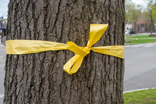 yellow ribbon tited to a big thick tree