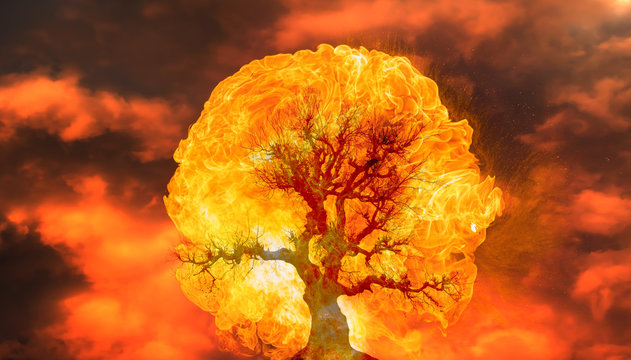 Burning Tree on fire at day with stormy sky and lightning