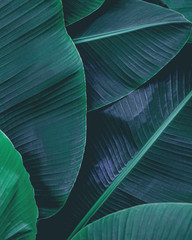 Stores à enrouleur Pierre, Sable closeup nature view of tropical leaf, dark wallpaper concept, abstract nature green background