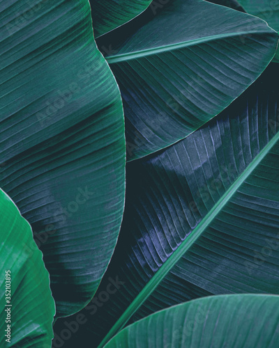 Wall mural closeup nature view of tropical leaf, dark wallpaper concept, abstract nature green background