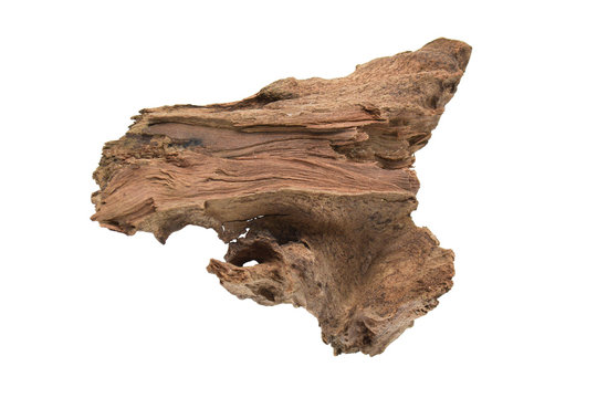 Driftwood or aged wood isolated on white background with clipping path. Closeup piece of driftwood for aquarium.