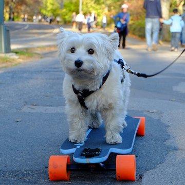 Dog Riding A Skateboard