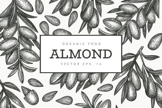 Hand drawn sketch almond design template. Organic food vector illustration. Retro nut illustration. Engraved style botanical background.