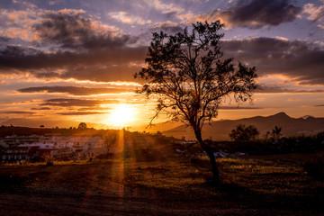 Foto auf Gartenposter Schokobraun Scenic Shot Of Tree On Countryside Landscape