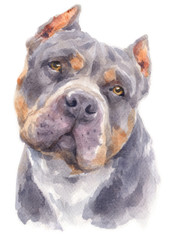Water colour painting of Pitbull dog 179