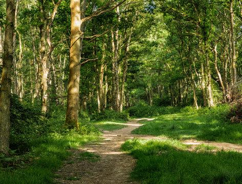Woodlands in Spring
