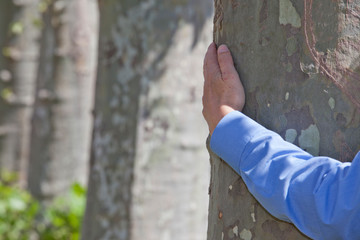 Arm of a businessman hugging a tree as a symbol of sustainability