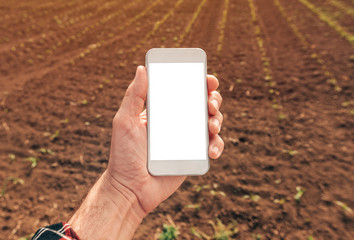 Agronomist with smartphone mock up screen in corn field