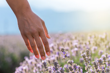Touching the lavender.