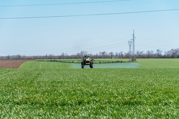 Tractor spraying wheat field.