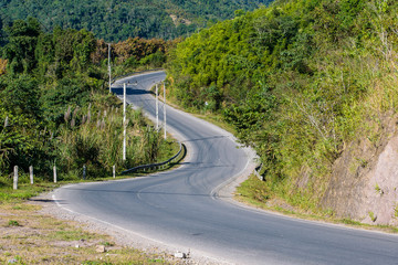 Fotomurales - Scenic View Of Road Amidst Trees In Forest